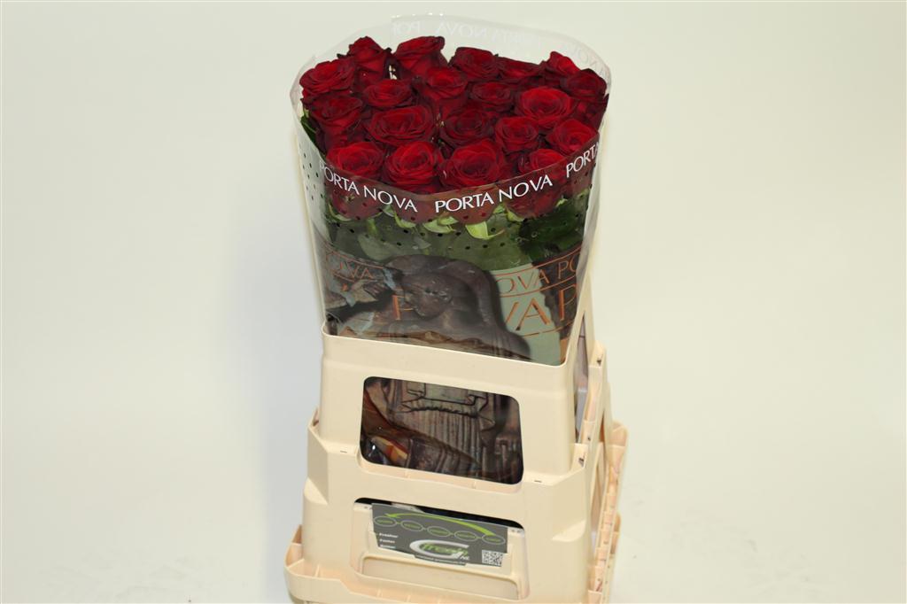 Rozenkwekerij Porta Nova: Rosa Red Naomi!